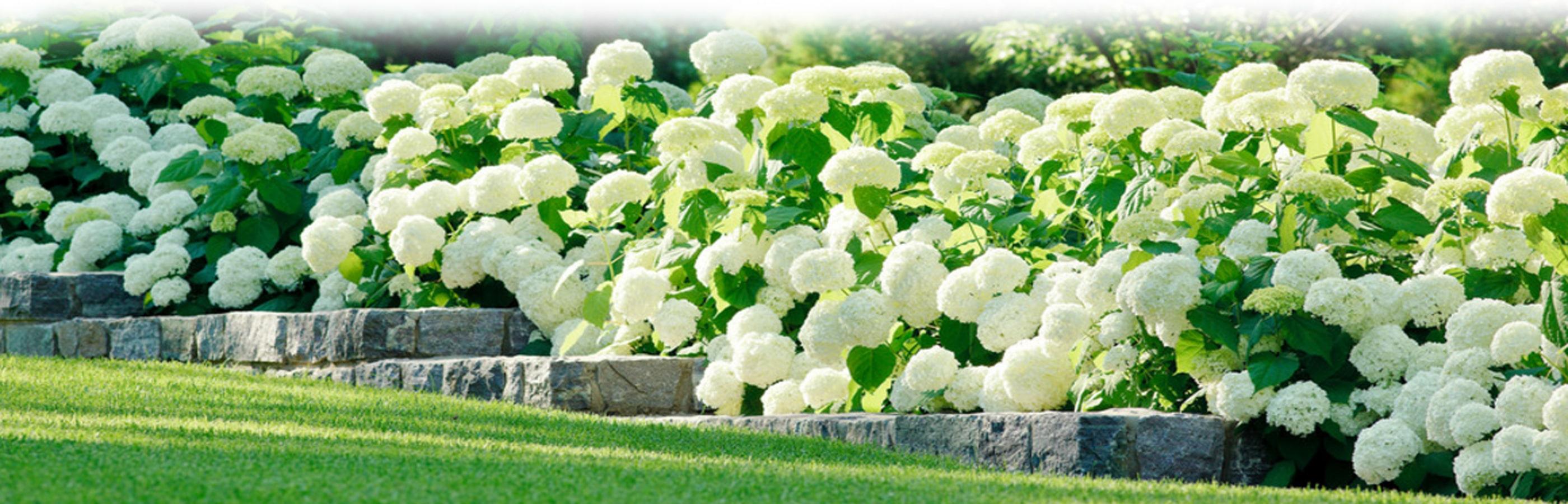 paysagiste création florale